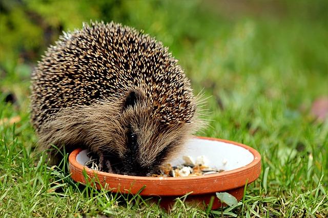 Gr Ne Tierwelt Igel Im Garten Der Notfall Igel Fund