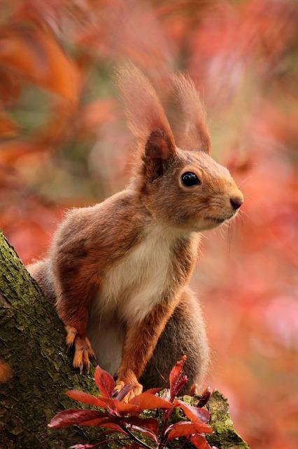 Eichhörnchen - Besuch im Garten. Eichhörnchenbaby gefunden?